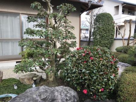 庭の剪定を東大阪市で行いました